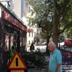 Arborister putsar träden