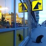 """""""En hund som väntar på sin husse"""""""