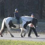 """""""Hästarna tenderar att reagera mest"""""""
