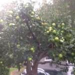 """""""Välkomna att plocka våra äpplen"""""""