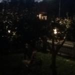 """""""Vi har satt upp lampor i träden så de kan plocka"""""""