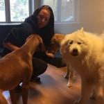 """""""Tanken är att kunna använda hundarna i undervisningen"""""""