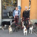 TÄVLING: Var finns Hägerstens härligaste hund?
