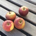 Äppelmos på en ingrediens
