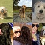 Rösta fram din favorit i Hägerstens härligaste hund!