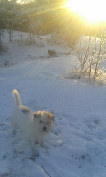 Rose-Marie Wellsjö Vinterdagsmys på Hägerstensåsen.