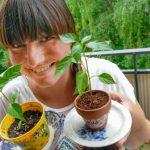 Inez byter plantor på Facebook