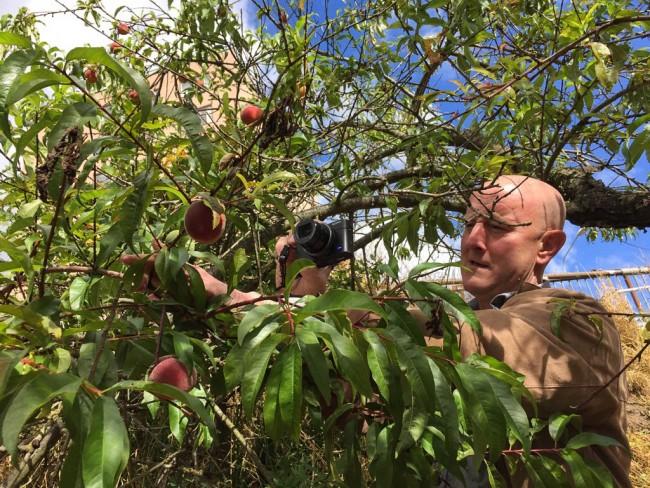 peaches2 (1 av 2)