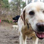 Förslag: Här kan man bygga en rastgård för hundar