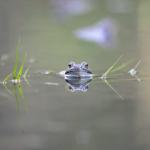 FILM: Se grodorna leka i Älvsjöskogen