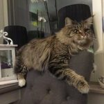 Har du sett katterna Smillan och Snöret?