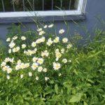 Krönika: Ovårdad tomt eller blomsteräng?