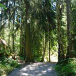 Förslag: Märk upp motionsspåren i Älvsjöskogen