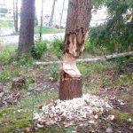 Insändare: Träden kan ju falla när som helst