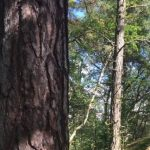 Krönika: Räddningen för Årstaskogen?