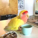 Vems är denna lilla kärleksfulla fågel?