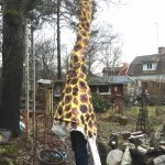 Giraff från Mälarhöjden gör succé i julspel vid Kungsan