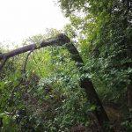 Nerblåst träd blockerar gångvägen