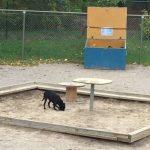 Lös hund på förskolans gård
