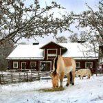 Lokala hästgårdar: Så undviker du sprida hästviruset