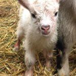 Nyfödd i Aspuddsparken