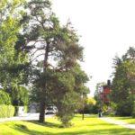 Krönika: Tallarnas historia i Mälarhöjden