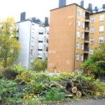 Insändare: Ska man fortsätta eliminera grönskan runt våra hus?