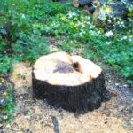 Insändare: För varje träd som fälls plantera två