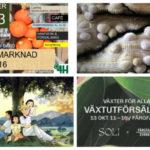 Händer i helgen: 14 lokala tips