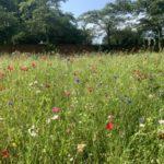 Villaägare gör ängsmark av kortklippta gräsmattor