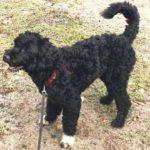 Hund från Västertorp bortsprungen i Glömsta