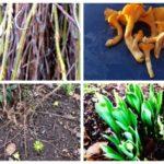 Rekordmild vinter – här tittar våren fram