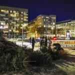 Bilder: Ett skepp kommer lastat med julgranar