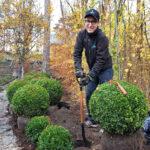 Trädgårdstips: Våga vara lat i vår