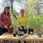 Succé för Älvsjöbornas egna plantbytardag – växter fick nya hem