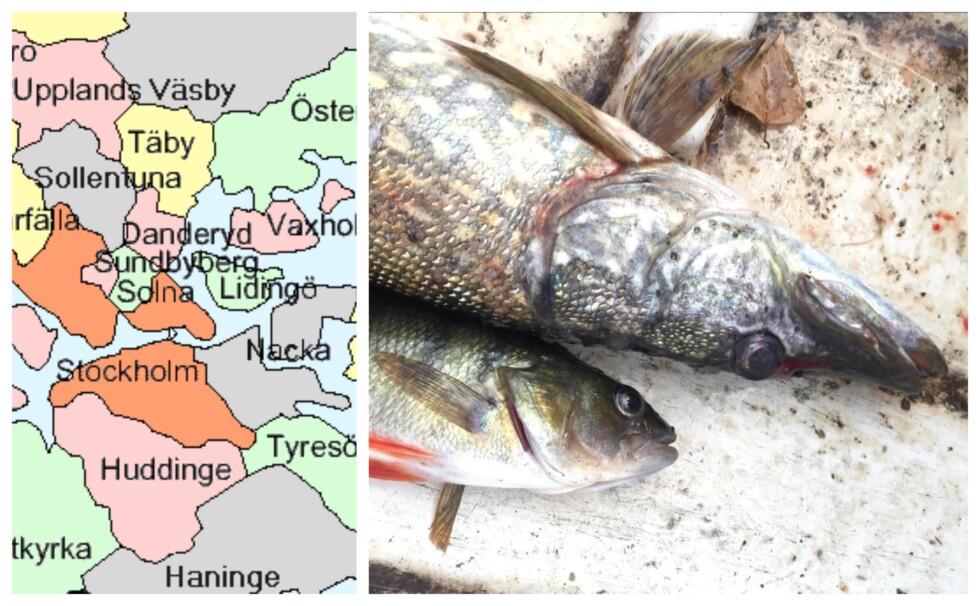 fisk stockholmskarta