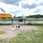 Förslag: Här kan en ny hundrastgård anläggas och denna behöver rustas